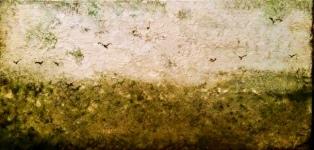 Gullscape, 2012 Oil on Canvas